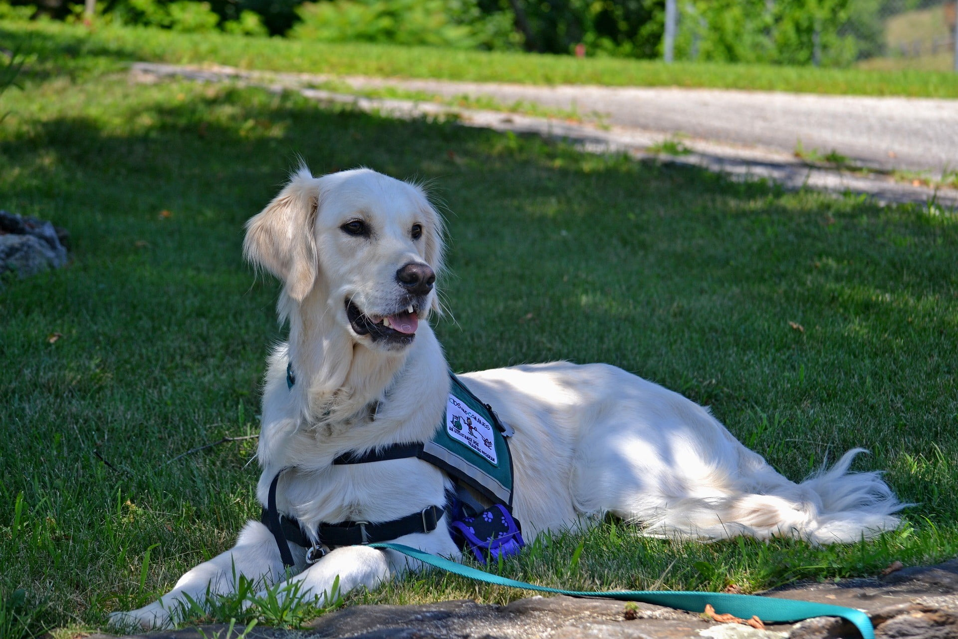 Service Dogs With Calgary Family